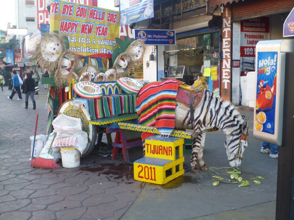 "a spraypainted ""zebra"""